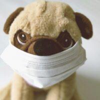 犬の花粉症涙やけや目が充血したりする?目薬は効果があるの?